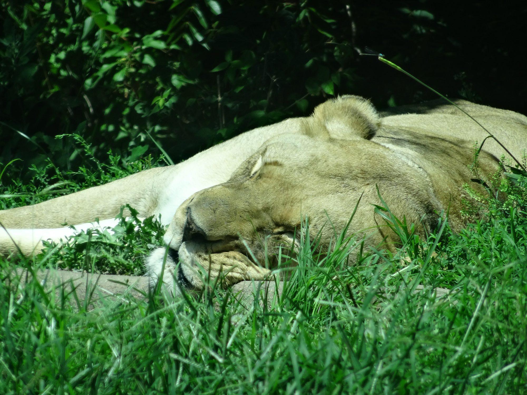 2017 GDS Zoo (46)